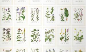 tapet_sandberg_botanical